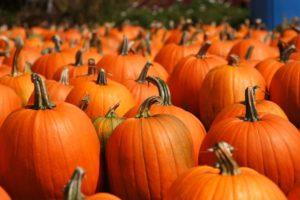Pumpkin Patch @ Dublin El Kinder lot